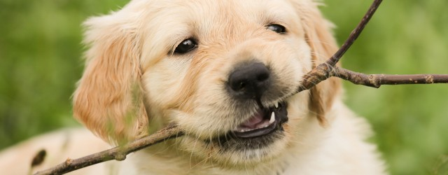 Protect Your Family and Pets From Litigation